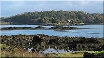 SH5571 : Church Island in the Menai Strait by Martin Wynne