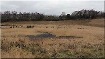 SK4067 : Grassmoor Country Park (Grassmoor Lagoons) by Alan Walker