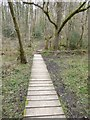 SS9011 : Boardwalk in Nethercleave Copse by David Smith