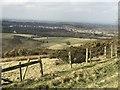 SJ8151 : Gorse on Bignall Hill by Jonathan Hutchins