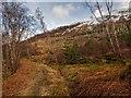 NN2077 : Aonach Mòr Mountain Bike Trail by valenta