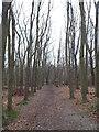 TQ5064 : Footpath through Upper Beechen Wood, near Eynsford by Malc McDonald