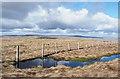 NY7139 : Streak of water beside fence by Trevor Littlewood