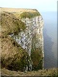 TA1974 : Sea cliffs at Bartlett Nab by Oliver Dixon