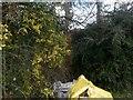 SJ2406 : Leighton: a well-hidden telephone box by Chris Downer