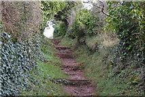 SX9266 : Steps, South West Coast Path by N Chadwick