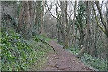 SX9267 : South West Coast Path by N Chadwick