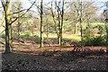 SO8698 : Woodland at Wightwick Manor by Bill Boaden