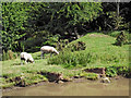 SP3683 : Canalside grazing south-east of Hawkesbury, Warwickshire by Roger  Kidd