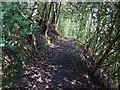SK3375 : Footpath Barlow FP61 nr Common Side by Dave Dunford