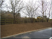 TL8584 : Newly cleared verge by the BP garage on the Thetford bypass by David Howard