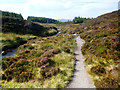 NH4366 : The descent from Ben Wyvis by Andy Waddington