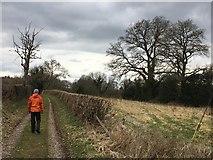 SJ4335 : Footpath out of Welshampton by John Darch