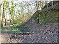 SJ9289 : Sandstone cliff near River Goyt by Dave Dunford