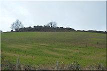 SX8957 : Hilltop bushes by N Chadwick