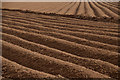SW8875 : Ploughed Field, Cornwall by Andrew Tryon