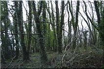 SX9464 : Woodland, Black Head by N Chadwick