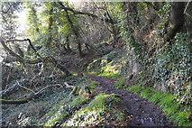 SX9464 : South West Coast Path (Bishop's Walk) by N Chadwick