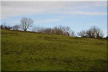 SX9268 : Field near Maidencombe Cross by N Chadwick