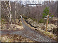 NN2379 : Trail junction in Leanachan Forest by valenta