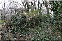 SX9057 : Ivy clad quarry by N Chadwick