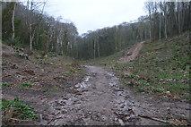 SX9156 : Muddy path, The Grove by N Chadwick