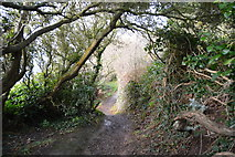 SX9463 : South West Coast Path, Thatchers Point by N Chadwick