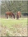 TQ1307 : Cissbury Ring: ponies grazing near the southern entrance by Stefan Czapski