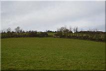 SX9269 : Devon pasture by N Chadwick