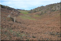 SX9369 : Valley near Commons Plantation by N Chadwick