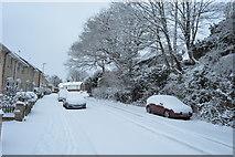 TQ5840 : Snow, All Saints Rise by N Chadwick