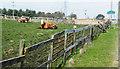 NZ3742 : Cattle behind complex fence by Trevor Littlewood