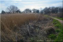 SZ3394 : Lymington : Pinckney Path by Lewis Clarke