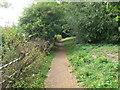 TQ2176 : Thames Path by Dan Mason Drive by Eirian Evans