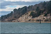 SZ0287 : Purbeck : Brownsea Island by Lewis Clarke