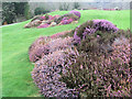 SX7384 : Beds of heather on the lawn at Bovey Castle by Chris Reynolds