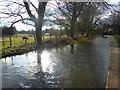 TQ5365 : River Darent at Eynsford by Marathon