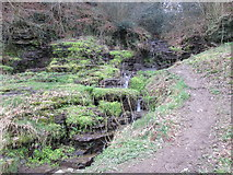 SO5074 : Stream at Whitcliffe Common (Ludlow) by Fabian Musto