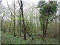 TQ7513 : Fore Wood RSPB Reserve by PAUL FARMER