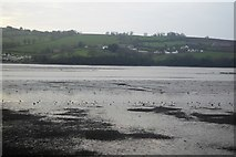 SX9173 : Mud, Teign Estuary by N Chadwick