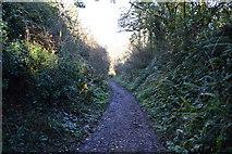 SX9371 : South West Coast Path by N Chadwick