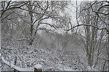 TQ5743 : Snowy woodland by London Rd by N Chadwick