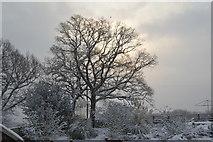 TQ5743 : Snowscene by N Chadwick