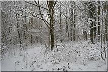 TQ5844 : Snowy woodland by N Chadwick
