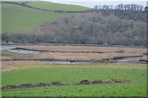 SX8158 : Marshes by the River Dart by N Chadwick
