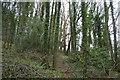 SX8157 : Lower Gribble Plantation by N Chadwick