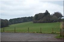 SX8257 : Stockern Plantation by N Chadwick