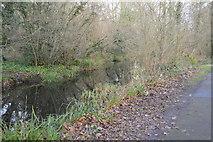 TQ2162 : Hogsmill River by N Chadwick