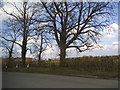 SP9002 : Trees by Potter Row, South Heath by David Howard