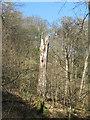 NT2570 : Woodpecker feeding post in the Hermitage of Braid by M J Richardson